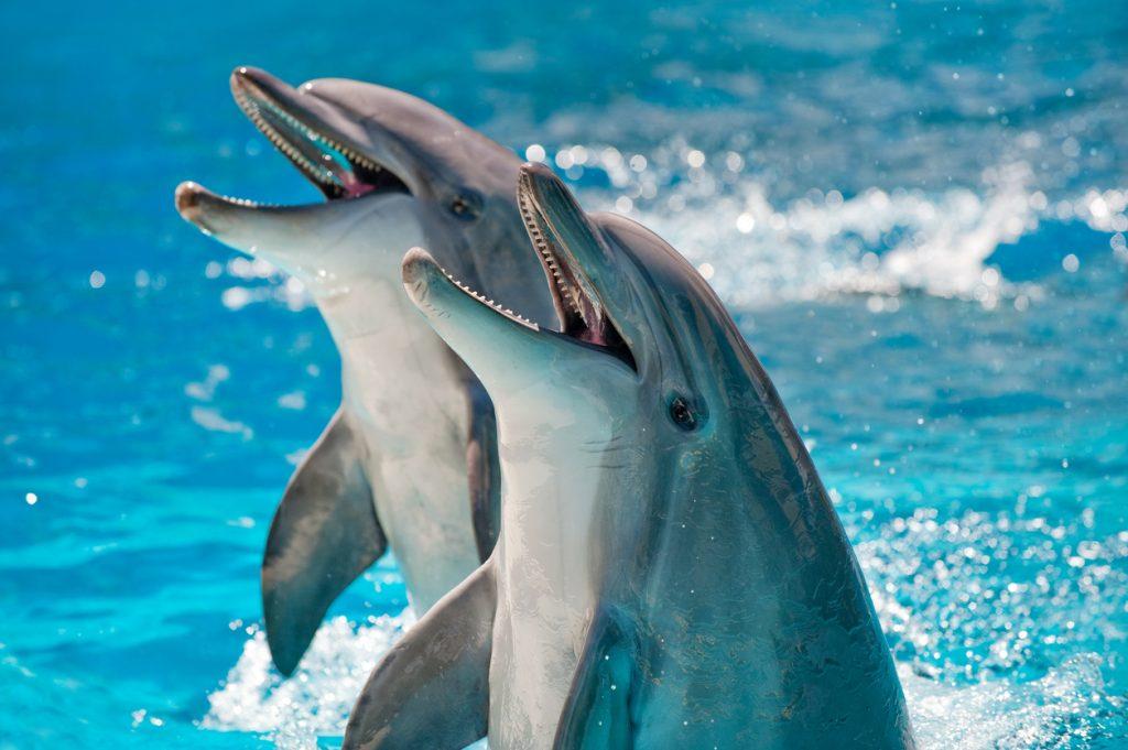 Dolphin Splash Encounter